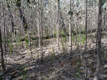 reforestation2