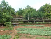 reforestation4